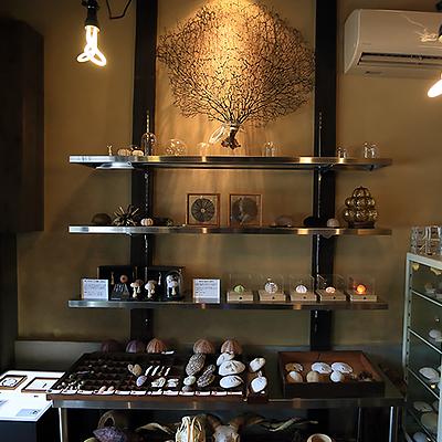 ウニ展ディスプレイ : 2014年7~9月に開催された「ウニ展」のディスプレイです。ウニの骨格標本やウニをモチーフにした照明や切り絵作品などを展示販売しました。