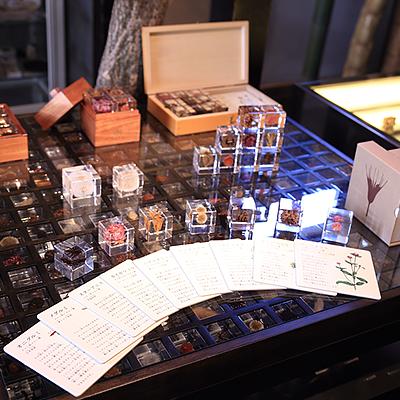 Sola cube ディスプレイ: 植物の美をテーマにした「Sola cube」の専用什器。整然と並んだ225個のキューブの上に商品が陳列されています。