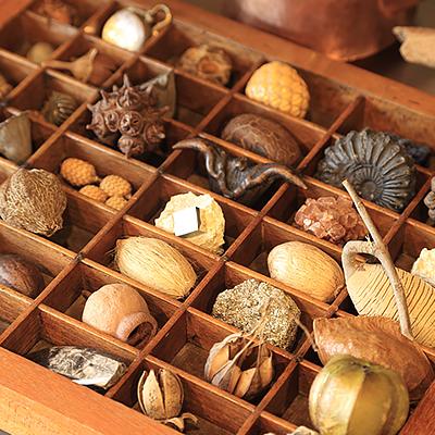 店内ディスプレイ : フランス製のアンティークトレイに木の実、化石、鉱物などの商品をディスプレイしています。