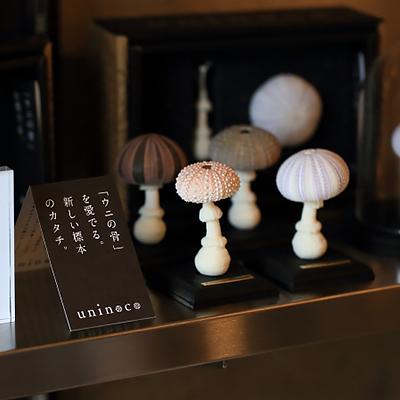 Uninocoディスプレイ : ウニの骨をキノコに見立てた新しい標本「Uninoco」