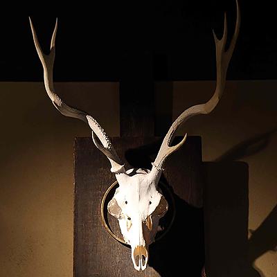 鹿の頭骨 : 美術家の濱口直己さんによる作品。過去を象徴する鹿の頭骨の目には、未来を見すえることを象徴する水晶がはまっています。