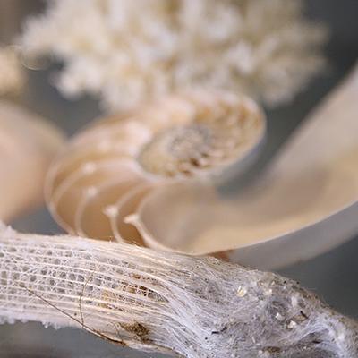 海の生物 : 海の中の生物。白いものだけを集めたディスプレイをしています。