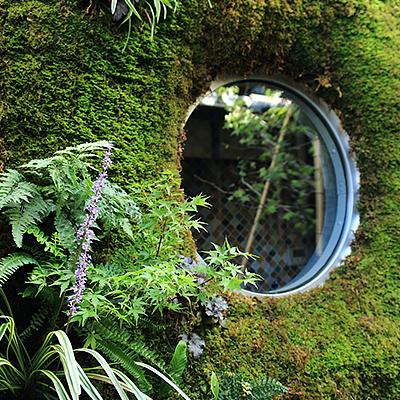 中庭 : 壁面緑化しています。丸窓の中は浴室です。