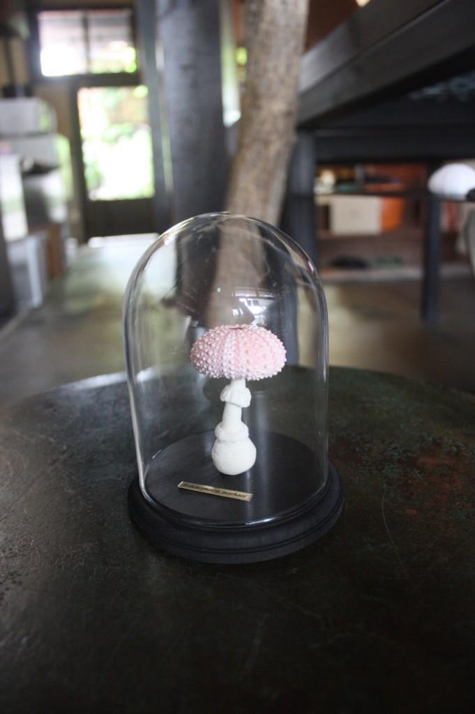 ガラスドームは別売:6,890円(税抜)